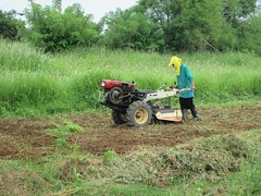 Rotovating the land (cbe-sep) Tags: tractor bed farming activity activities bedding area2 bedmaking rotovate handtractor landpreparation bedpreparation rotovating farmingactivity