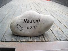 Pet Stone - Rascal