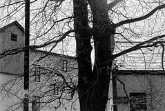 Ennis 6 (Ian Atrus Gazzotti · iangazzotti.com) Tags: trees ireland blackandwhite bw tree analog 35mm nikon clare bn ennis biancoenero irlanda f70