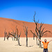 Sharp colors of the salt pan, sand dunes, and dead trees in Dead Vlei, Sossusvlei, Namibia