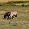 À deux c'est mieux-Explore (Bouteillerie) Tags: canon square cheval explore brutus kamouraska maggy basstlaurent carréfrançais équine bouteillerie chevalminiature