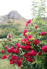VIVA LA MONTAA (juanluisgx) Tags: roses mountain lyrics spain song leon montaa rosas cancion alejico vivalamontaa vegadealejico
