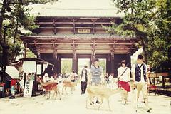 Nara + Tdai-ji Temple + Nadaimon | Japan, July 2014 (Sebastien BERTRAND) Tags: japan canon streetphotography streetphoto nara japon  photoderue greatsouthgate tdaiji  eos40d canon40d tdaijitemple fotomato sebfotomato sbastienbertrand sebastienbertrand nadaimon grandeportesud templetdaiji
