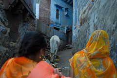 Jodhpur backstreets with Cow, Rubbish and two Women (arnklit) Tags: street blue orange india yellow cow streetphotography places sacred rajasthan jodhpur sarii