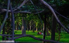 IMG-Cubbon Park (PhotographybyRenuka) Tags: park trees green nature garden outdoor greenery