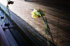 Vietnam Memorial (crowt59) Tags: rose yellow wall dc washington nikon memorial viet nam d800 the crowt59 nikonflickraward