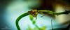 DD.CAP.2014.09.21.000051 (Dilan Damith Prasanga's) Tags: trip travel summer vacation tourism nature beautiful island photo bravo perfect photographer sri lanka stunning watcher the impressedbeauty srilankarailway srilankatours toursrilanka