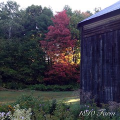"Fall has arrived here at 1840 Farm! • <a style=""font-size:0.8em;"" href=""http://www.flickr.com/photos/54958436@N05/15154130147/"" target=""_blank"">View on Flickr</a>"