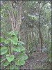 3213611809_fbcd074b04_o (gray.florie) Tags: allrightsreserved usewithoutpermissionisillegal ©2009florencetomasulogray florencegray floriegrayflorencetomasulograytomasulofloriegrayfloriegraycom