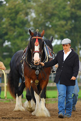 IMG_3643-k (Mandy Bramavi) Tags: show horse shire