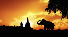 Elephant silhouette in Thailand