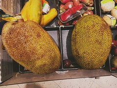 Jackfruit (dax46407) Tags: jackfruit meijers produce pana