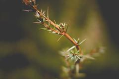 Winter green (Chloé +++) Tags: winter hiver green vert arbuste branche branch nièvre bourgogne france canon os400d flou profondeur de champs orange nature flore forest forêt prairie