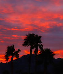 Morning Silhouette (http://fineartamerica.com/profiles/robert-bales.ht) Tags: arizona foothills forupload haybales palmtree people photo places plants projects states sunsetorsunrise sunrise sunset street southwest red yellow landscape silhouette clouds desert twilight sunrays orange nature beautiful colorful bright scenic stunning mountain morning sensational spectacular cirrus southwestern horizon sonoran panoramic awesome magnificent peaceful surreal sublime magical spiritual inspiring inspirational tranquil sunlight wallpaper yuma robertbales