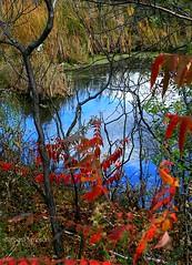 Autumn Foliage at Jones' Creek (barbarasimpson_photography) Tags: 1000islands stlawrenceriver jonescreek autum weekend foliage bluesky sunset pretty environment ontario canada sumac dusk trees maples colour red orange white green purple lavender water majestic