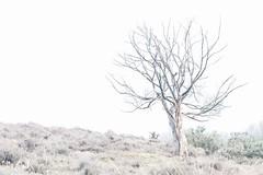 The Embrace (Renate van den Boom) Tags: 03maart 2017 boom europa gelderland highkey jaar landschap maand natuur nederland renatevandenboom stijltechniek veluwezoom