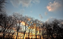 Late Winter Sunset (mswan777) Tags: sunset stevensville michigan forest tree cloud sky evening landscape woods nature outdoor scenic nikon d5100 sigma 1020mm orange blue winter light glow