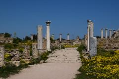 DSC_0246 (mark.greefhorst) Tags: cyprus northerncyprus salamis ancientworld roman