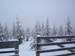 DSC03246 (oleg.shyshov) Tags: sony winter mountains snow snowy gloomy fence serenity trees firtrees blizzard forest lost quiet