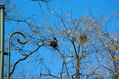 Prima aprilis in Cracow 74 (Hejma (+/- 5400 faves and 1,7 milion views)) Tags: planty lighthouse tree nest rakes blue sky