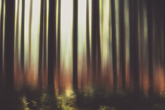 air do na h-Alba (Stefan (back from Scotland, but need some time)) Tags: forest icm abstract dark forestscape trees tree light colors color bavaria green soil duff timber woods woodland timberland sonya7m2 sonya7ii sonya7 canonef7020028lisiiusm