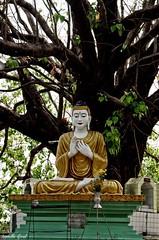 (isabelle.giral) Tags: mawlamyine buddha burma birmanie myanmar bouddha pentax