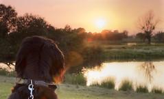 (Zooooomografie) Tags: sunset sky sun dogs nature animals deutschland sony nordrheinwestfalen landscapephotography steinhorsterbecken delbrück sonyalpha77