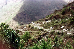 21-232 (ndpa / s. lundeen, archivist) Tags: nepal mountain mountains color film animals rural 35mm landscape 21 path nick hill goat hills trail goats mountainside nepalese 1970s hillside 1972 livestock himalayas nepali dewolf nickdewolf photographbynickdewolf reel21 hillyregion