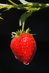 Just add cream (Glen Crowe) Tags: summer plant fruit canon strawberry growing