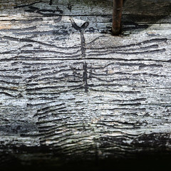 Bug Art (bogenfreund) Tags: wood insect hole urlaub worm shotwell 2014 verzasca 0180