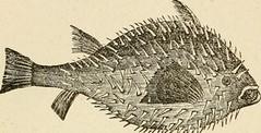 Anglų lietuvių žodynas. Žodis lump-sucker reiškia vienkartinis siurblys lietuviškai.