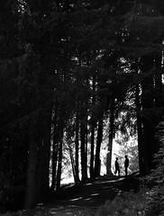 Friendship (fotomie2009) Tags: monocromo monochrome bn bw monotone friends woodland bosco svizzera suisse switzerland forest vallese valais arbaz anzère