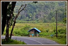 Tea Hut.............. (karthis studio) Tags: drive nikon colorful ride tea scenic kerala hut breeze bliss wayanad scenicview d7000 karthisstudio
