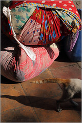 tails, mumbai (nevil zaveri (thank U for 15M views:)) Tags: zaveri dhobi ghat dhobighat laundry bundle cloth clothe attire saree pack light india photo tradition traditional photography photographer photographs photos images stockimages destination photograph mumbai bombay maharashtra nevil floral design tail cat shadow animals slum mammals nevilzaveri stock colors colours