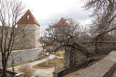 Tallinn town wall (Ne_Obliviscaris) Tags: wall de town tallinn estonia towers virgin kok kiek