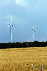 Windmills (melissajellie) Tags: field outside wheat windmills 15challengeswinner friendlychallenges thechallengefactory canonrebelt5i