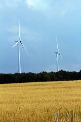 Windmills (melissajellie) Tags: field outside wheat windmills 15challengeswinner friendlychallenges thechallengefactory canonrebelt5i
