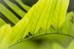 Bridge (mikemcnary) Tags: plant green nature leaf stem soft curve