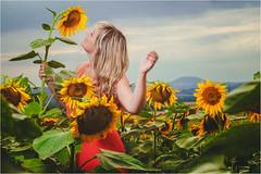 In the Sunflowers (Tomas.Kral) Tags: portrait woman girl female canon lens landscape 50mm sunflower m42 russian helios speedlite eosmarkii strobist yn560ii