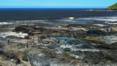 Tidepool viewing (Wolfram Burner) Tags: life sea oregon lava coast pacific northwest sony tide sealife pools cape pnw tidepools perpetua ilce7
