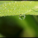 Dew Drop in the morning