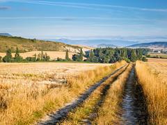 Camino Aragons 250.jpg (vossemer) Tags: geotagged day camino cloudy kultur natur felder aussicht orte esp jakobsweg aragones spanien ausblick wege landschaften navarra monreal aragons ortschaften pilgern lnder stimmungen regionen geo:lat=4270722984 geo:lon=151414156