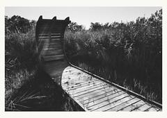 Marais du Vigueirat (AAphotographies) Tags: nature noiretblanc sony paysage marais camargue rx100 vsco
