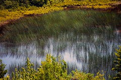 Swamp Grass (Garden State Hiker) Tags: park summer reflection nature outdoors pond nikon hiking maine parks hike national acadia hikes cadillacmountain acadianationalpark d5100