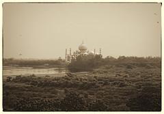 Agra IND - Taj Mahal 11