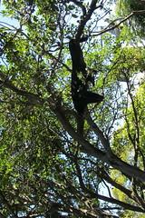 Day at Taronga Zoo (*~YY~*) Tags: australia nsw newsouthwales taronga tarongazoo mosman