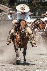 Charrera (esponjorge) Tags: horse mxico canon mexico caballo df jinete mx charro colas charreria eos30d ef70200f28lisusm coleadero lienzocharrodelpedregal esponjorge