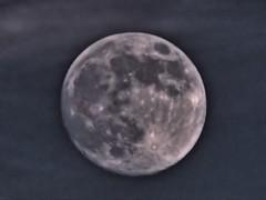 Moon HD low key 20140907 (Kenneth Cole Schneider) Tags: florida miramar backyardbirds