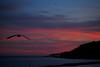 """Ritardatario (wallace39 """" mud and glory """") Tags: sunset sea italy clouds italia tramonto nuvole mare seagull liguria gabbiano ospedaletti rememberthatmomentlevel1 rememberthatmomentlevel2 rememberthatmomentlevel3"""