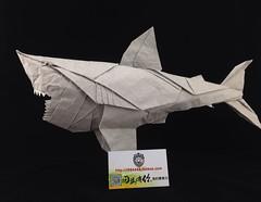 Great White Shark Nguyen Hung Cuong    origami   Meizhou 86 fold (MEI ZHOU 86) Tags: white shark origami great fold 86 meizhou hung nguyen cuong